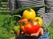 How to save money in the garden with DIY soil & containers, the best places to find cheap vegetable seeds and more .
