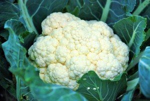 Cauliflower is incredibly nutritious & easy to incorporate into fun recipes.