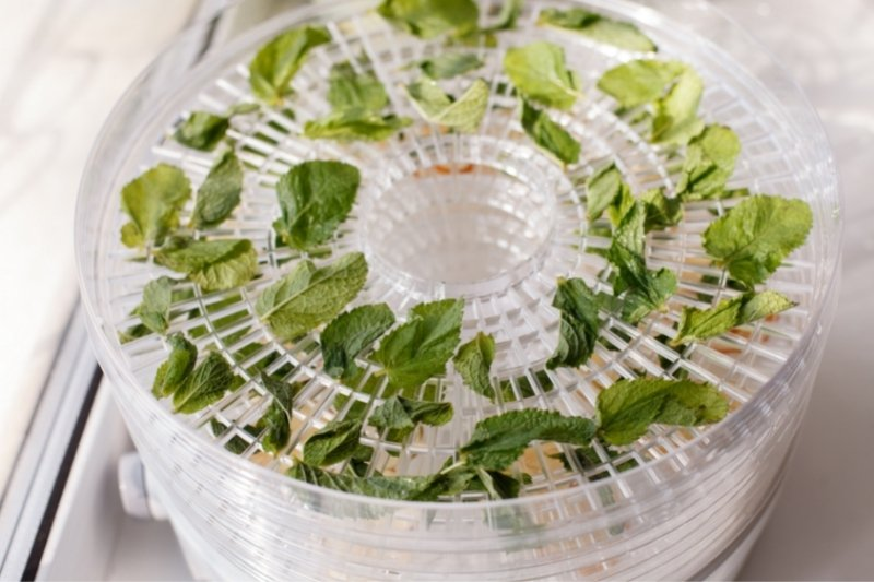 leaves of mint drying on a dehydrator tray